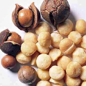 aliments riches en omega 3 noix de macadamia